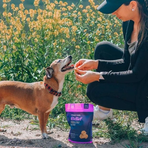 a dog is about to eat an Honest Paws CBD Relief Bite with turmeric added