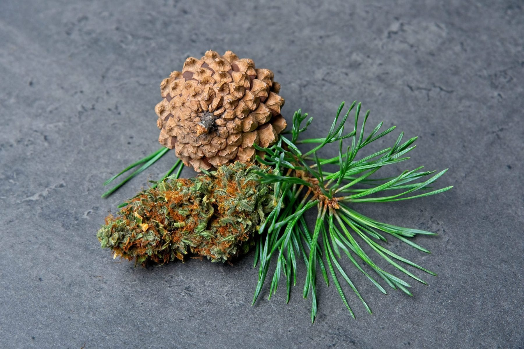 A Pine cone and cannabis bud to represent terpenes