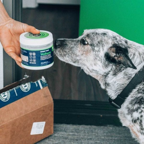 A black and white dog sniffing a jar of Honest Paws Coconut Oil