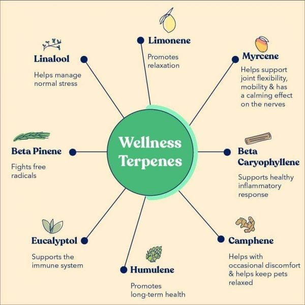 A chart of wellness terpenes for Honest Paws CBD Oil for Cats. A green circle in the middle with a spoke diagram of eight wellness terpenes.