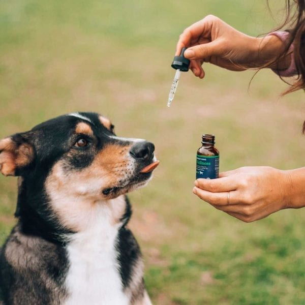 A dog anxiously waiting for a dropper of Honest Paws CBD Oil